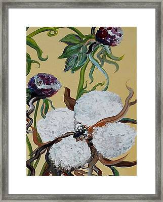 Cotton Boll Solo Framed Print by Eloise Schneider