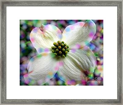 Cotton Candy Flower Framed Print by Renee Trenholm