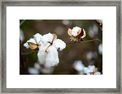 Framed Print featuring the photograph Cotton Creations by Linda Mishler