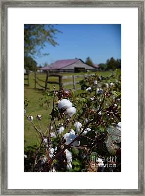 Cotton Farm Framed Print by Jeanne  Woods