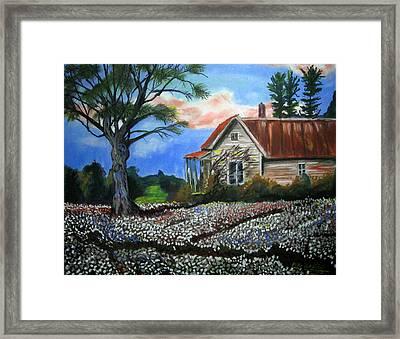 Cotton Fields Back Home Framed Print