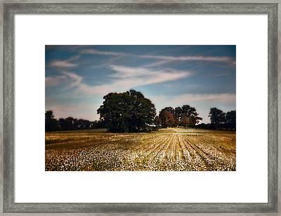 Cotton Field Cemetery Framed Print by Jai Johnson