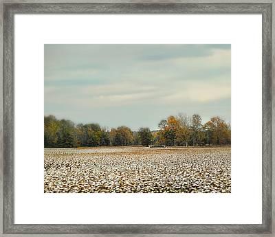 Cotton Field In Autumn - Rural Fall Scene Framed Print by Jai Johnson