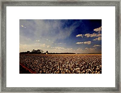 Cotton Field Framed Print by Scott Pellegrin