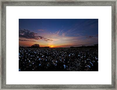 Cotton Field Sunrise Framed Print