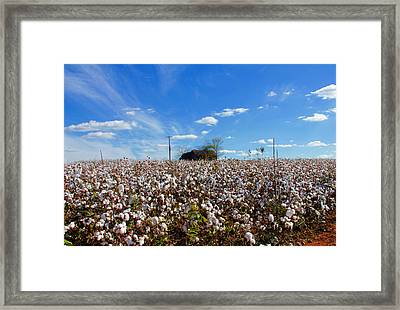 Framed Print featuring the photograph Cotton Field Under Cotton Clouds by Andy Lawless