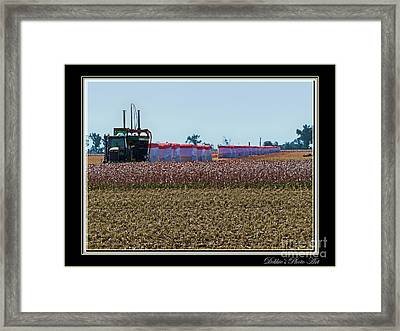 Cotton Harvest Framed Print