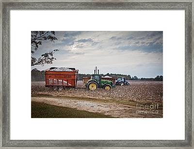 Cotton Harvest With Machinery In Cotton Field Framed Print