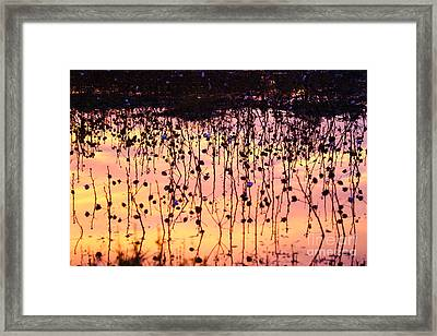 Cotton Reflections Framed Print
