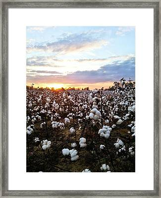 Cotton Soft Framed Print by JC Findley