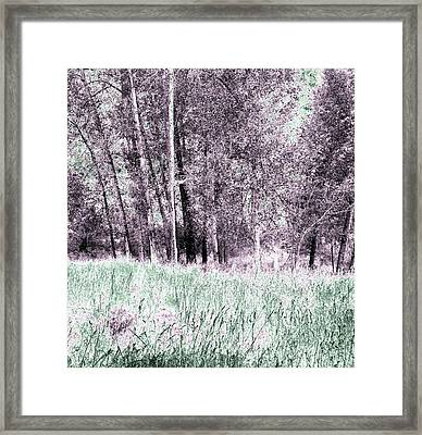 Cotton Trees And Meadow Framed Print