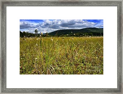 Cottongrass Cranberry Glades Botanical Area Framed Print by Thomas R Fletcher