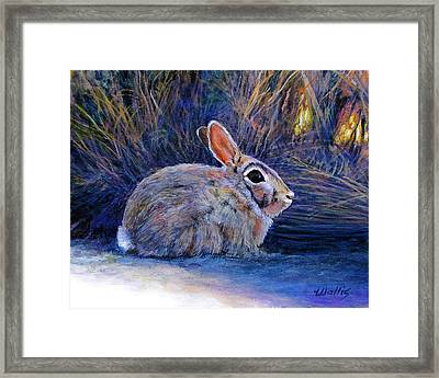 Cottontail In The Shadows Framed Print by Charles Wallis