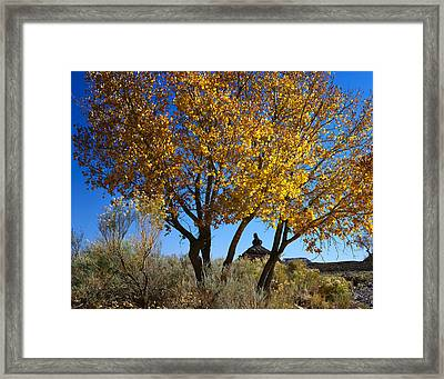 Cottonwood And Nipple Butte Framed Print