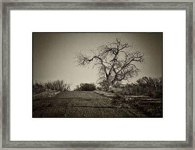 Cottonwood Framed Print by Jeanne Hoadley