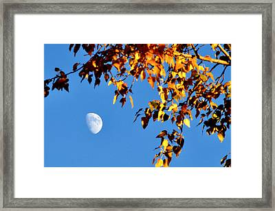 Cottonwood Moon Framed Print by Jan Davies