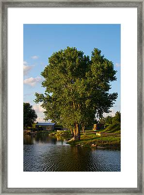 Cottonwood Framed Print