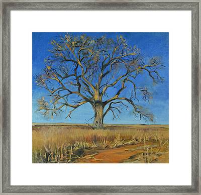 Cottonwood On The North 40 Framed Print