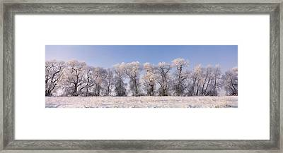 Cottonwood Trees Covered With Snow Framed Print by Panoramic Images