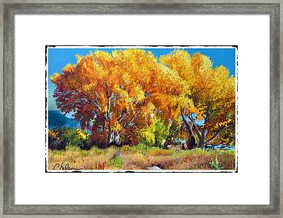 Cottonwoods Along The Colorado Framed Print by Craig Nelson