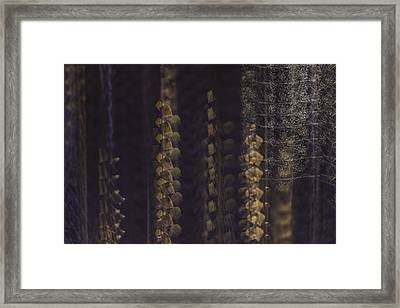 Cottonwoods In Winter Framed Print