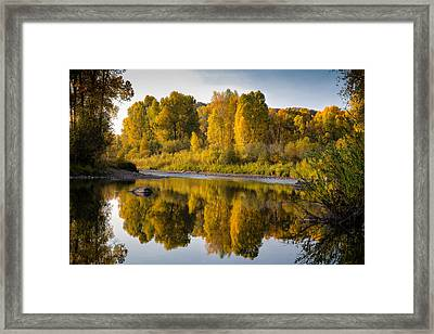 Cottonwoods On The Elk Framed Print