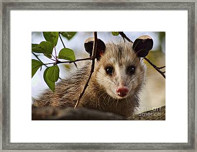 Coucou - Close-up Framed Print by Nikolyn McDonald