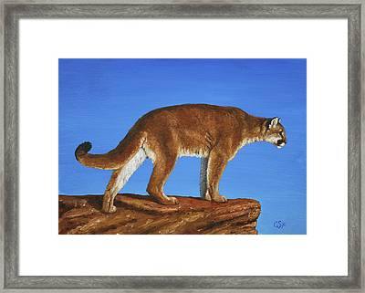 Cougar Cliff Framed Print by Crista Forest