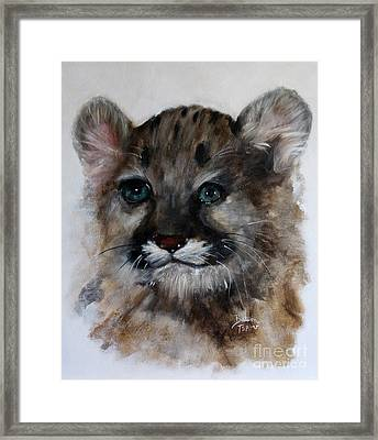 Antares - Cougar Cub Framed Print by Barbie Batson