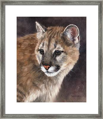 Cougar Cub Painting Framed Print