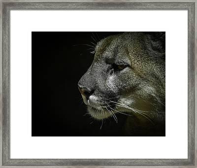Cougar Framed Print by Ernie Echols