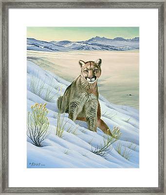 'cougar In Snow' Framed Print by Paul Krapf