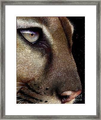 Cougar Framed Print by Jurek Zamoyski
