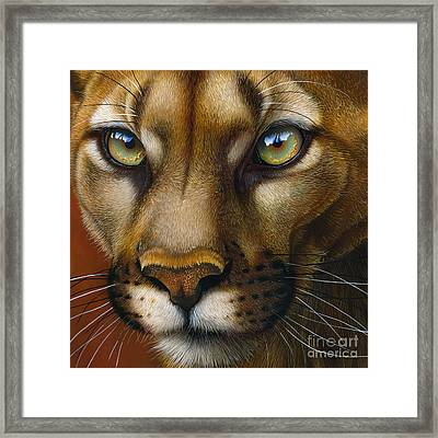 Cougar October 2011 Framed Print by Jurek Zamoyski