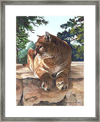 Cougar Outlook Framed Print