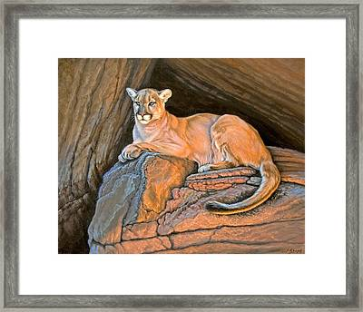 Cougar Framed Print by Paul Krapf