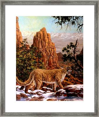 Cougar Framed Print by W  Scott Fenton