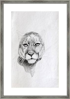 Cougar Framed Print by Wade Clark