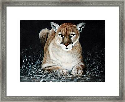 Framed Print featuring the painting Cougar Waiting by DiDi Higginbotham