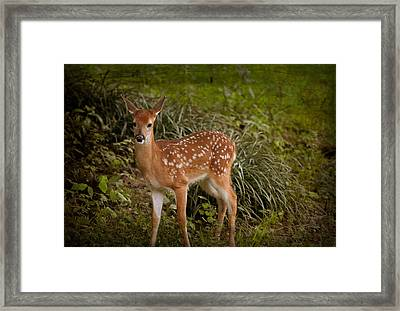 Could It Be Bambi Framed Print