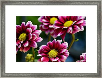 Count Your Blessings..... Framed Print