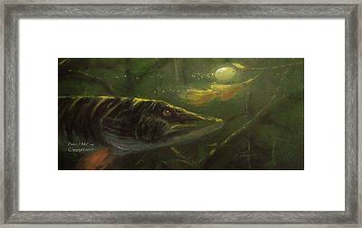 Countdown - Musky Framed Print by Peter McCoy