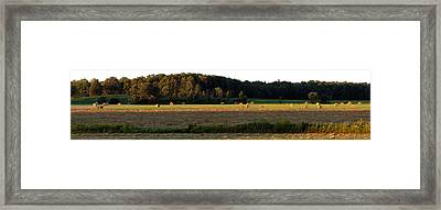 Country Bales  Framed Print