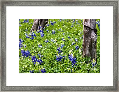 Country Blues Framed Print