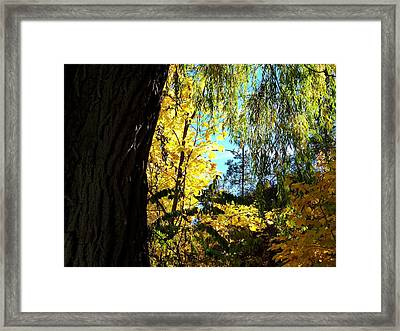 Country Color 29 Framed Print by Will Borden