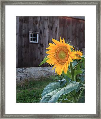 Country Flower Framed Print