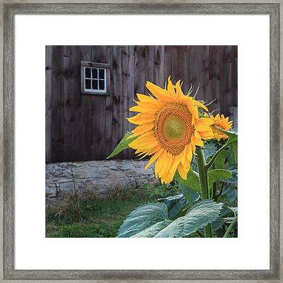 Country Flower Square Framed Print by Bill Wakeley