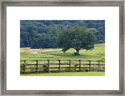 Country Lane - D008558 Framed Print