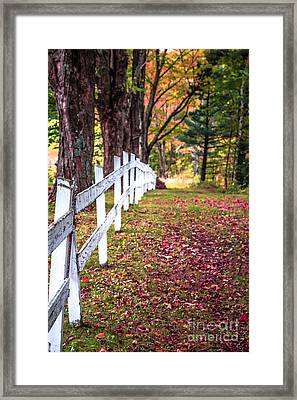 Country Lane Fall Foliage Vermont Framed Print