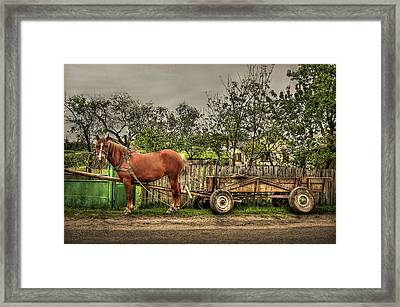 Country Life Framed Print by Evelina Kremsdorf